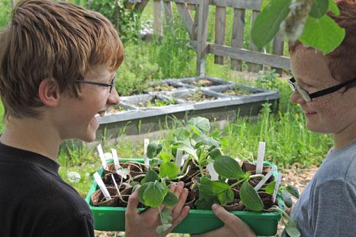Gartenpädagogik Aussetzen der Jungpflanzen