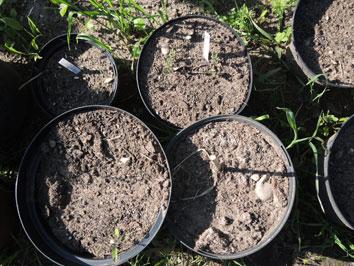 Regenschaden - Gartenpaedagogik