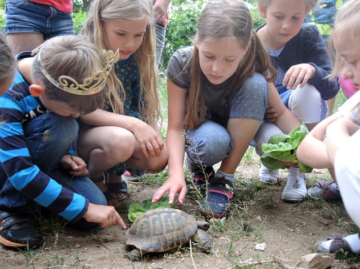 Horst - die Schildkröte, Gartenpaedagogik
