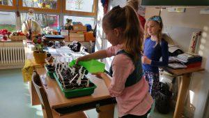 Anzucht im Klassenzimmer - Gartenpädagogik Paetow