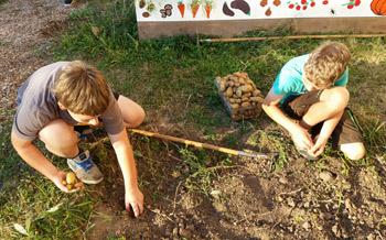 Gartenpädagogik Paetow - Kartoffelernte im Schulgarten